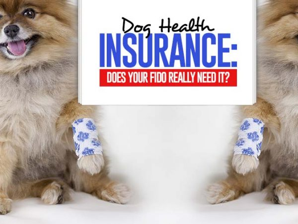 Dog Health Insurance Pet Care