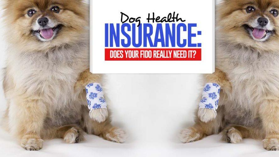 Dog Health Insurance Pet Care