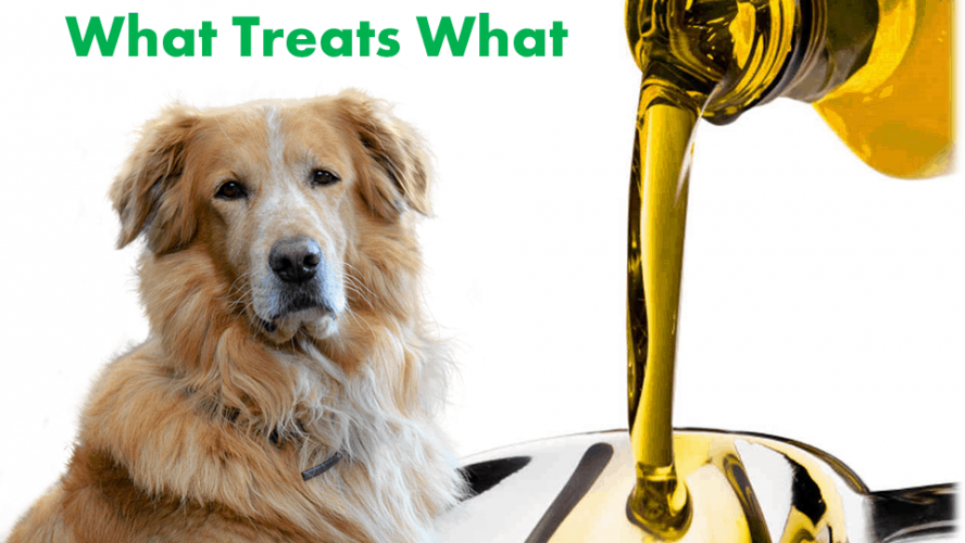 How can CBD oil beneficial in treating seizures in dogs? Check out e short guide on it